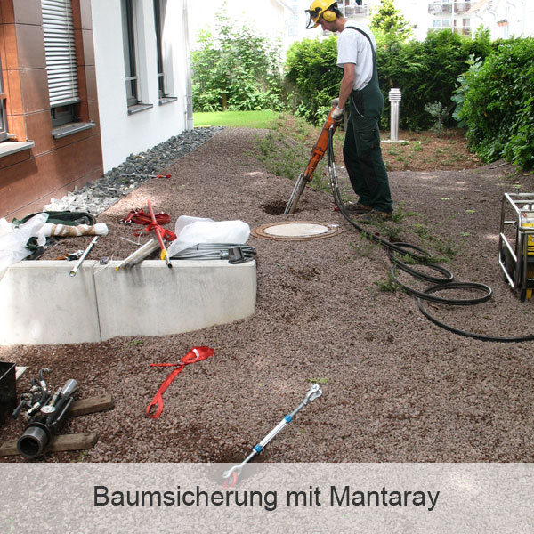 Baumsicherung mit Mantaray